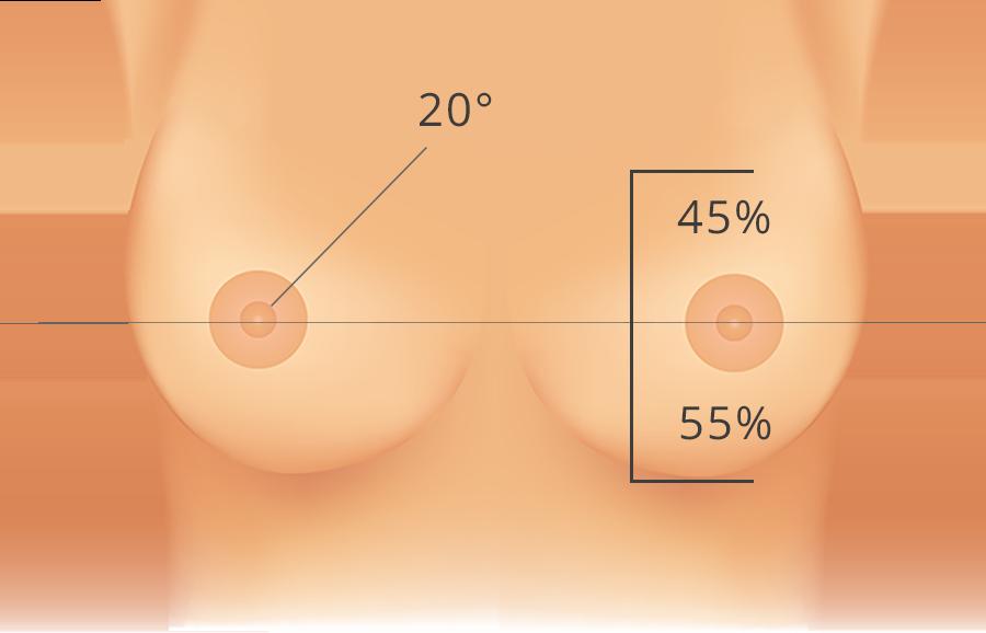 forme idéale de la poitrine
