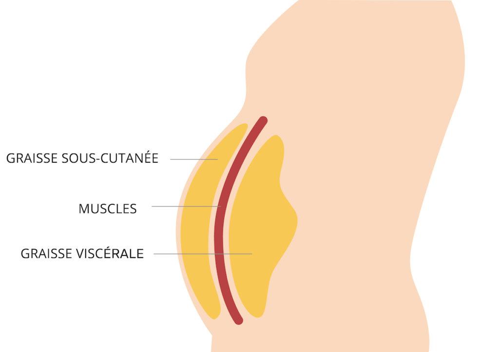graisse sous-cutanée dans le corps humain